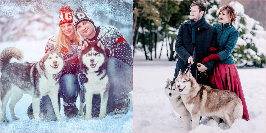 Большие собаки в моде