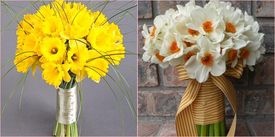 Нарциссы бывают белыми и желтыми